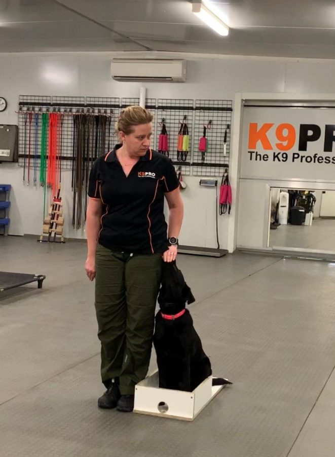 Dog Sports Coaching