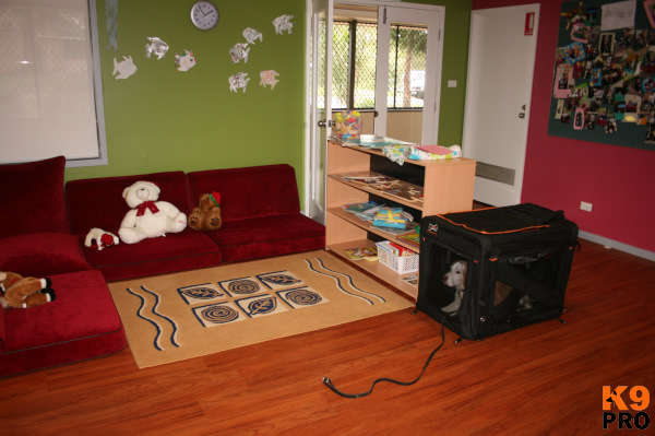 K9 Angels Therapy Room