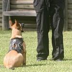 Wisdom sit pup-1