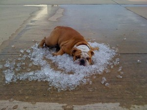 Don't let your dog feel heat stress or get heat stroke.