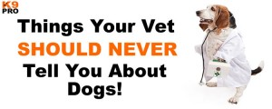 Things Your Vet Should Never Tell you About Dogs, K9 Pro Dog Training