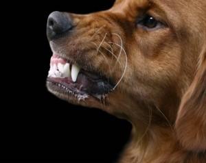Dog Bite No warning signs, dog behaviour