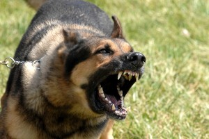 Dog Aggression, can it really be cured?