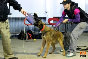 Dog Training Workshop