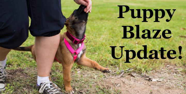 Puppy Blaze Update, dog trainer
