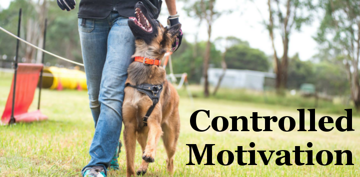Controlled Motivation, dog trainer.