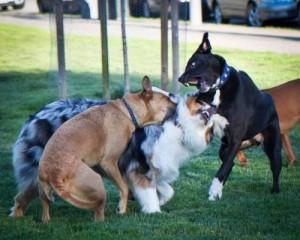 dog bite no warning signs