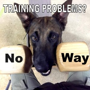 dog training problem