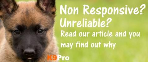 non responsive dog