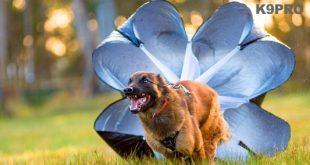 Alis parachute