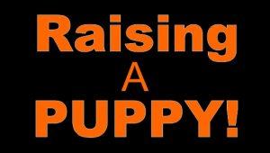 Raising a puppy