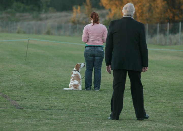 Dog Sports Coaching