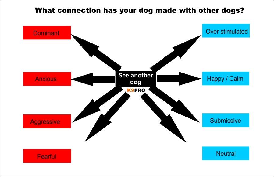 Medicating dogs