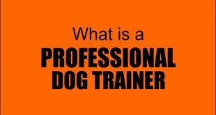 professional dog trainer