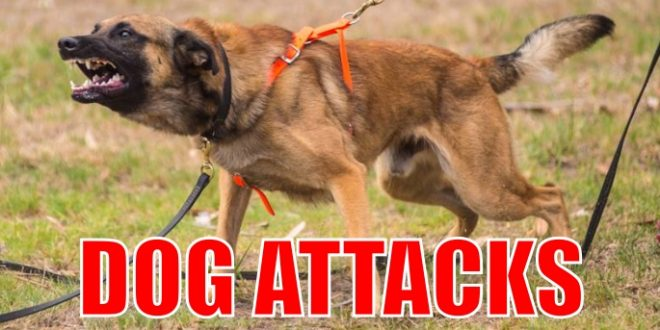 dog attacks