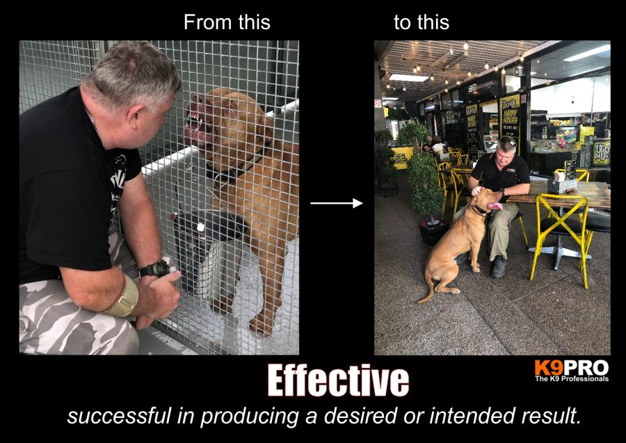 effective dog training