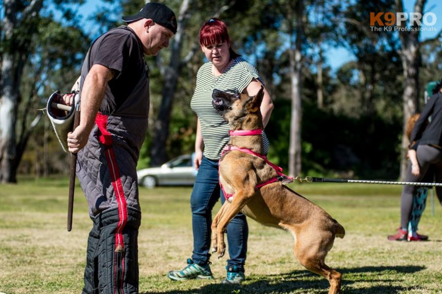 dog training concepts