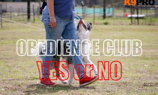 obedience club