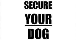 secure your dog