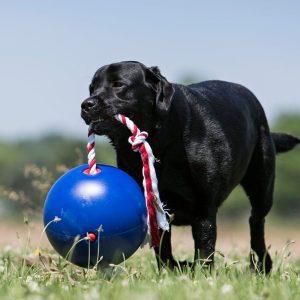 Indestructible Dog Toy