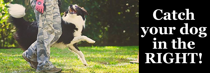 Catch your dog in the Right, dog behaviour