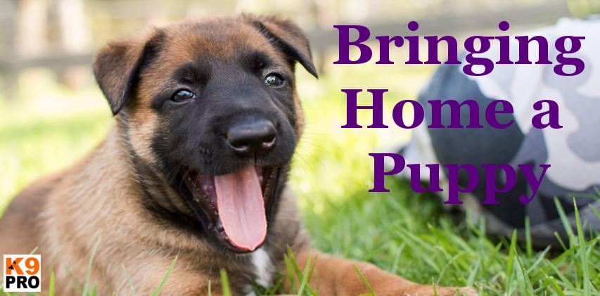 Bringing Home a Puppy, dog breed