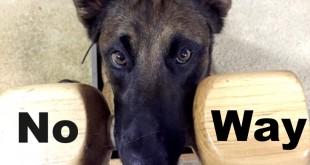 dog training problem