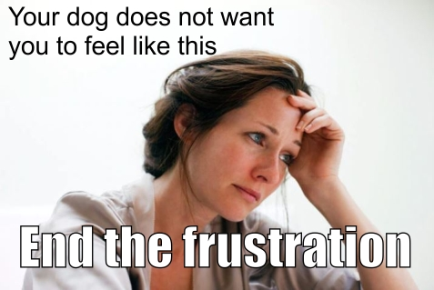 frustrated with your dog