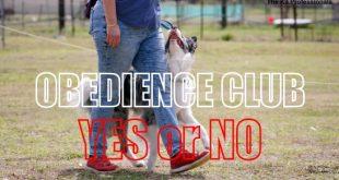 obedience club