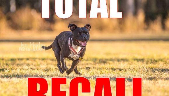 dog recall
